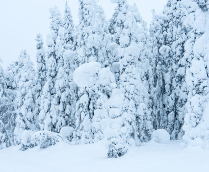 Roadtrip Noordkaap Finland sneeuw